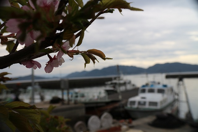 河津桜と定期船と 28.3.6
