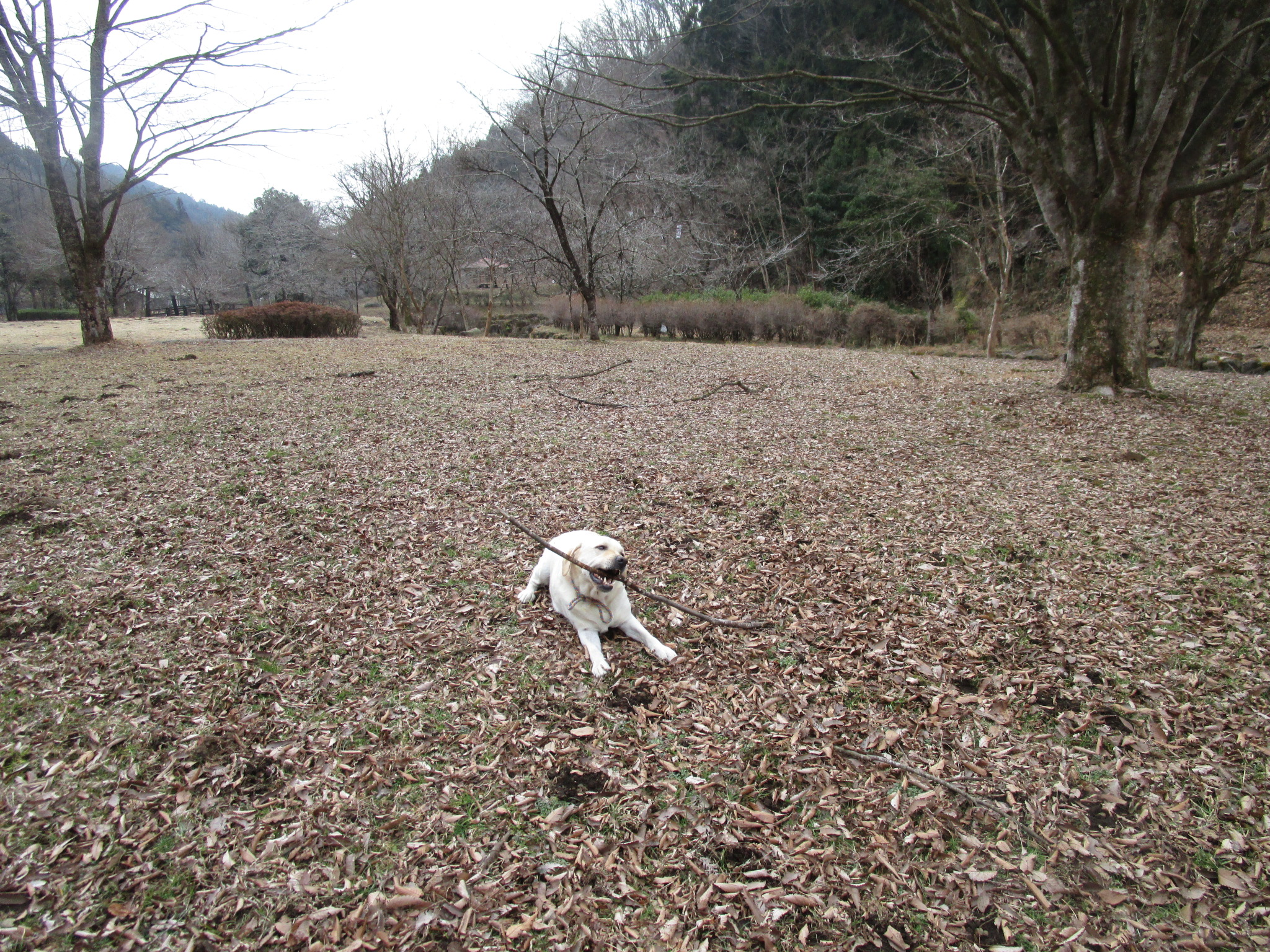 ふれあいの森2