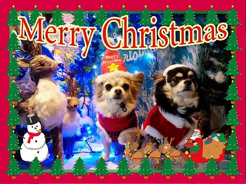 ブログクリスマス1