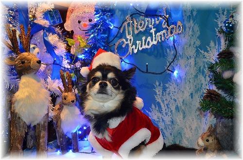 2015クリスマス (3)