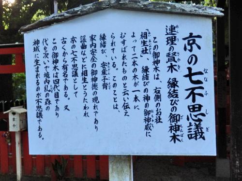 下賀茂神社 (14)_resized