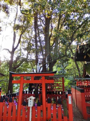 下賀茂神社 (15)_resized