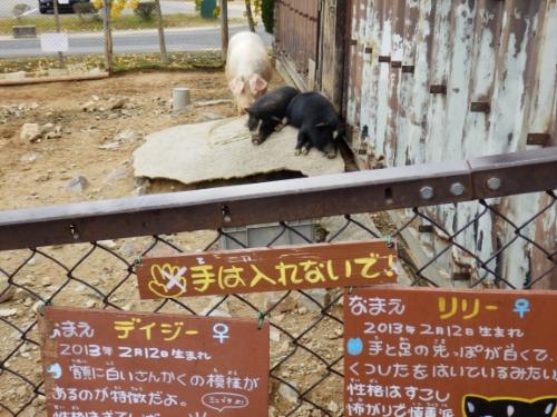 ふれあいゾーン (7)_resized