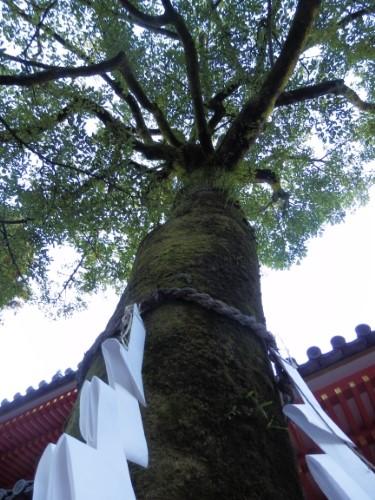 岩清水八幡宮 (69)_resized