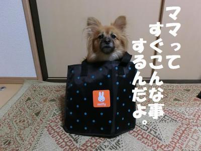 029繝シ菫ョ豁」_convert_20151215220939