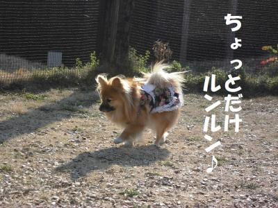 028繝シ菫ョ豁」_convert_20160112063348