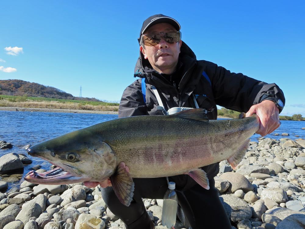 鮭釣り 鮭 釣り サーモン フィッシング 2015