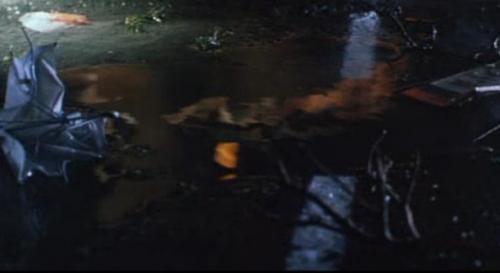 水たまり越しに映るガメラとイリス