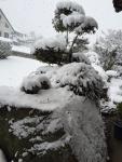 2016年1月 雪