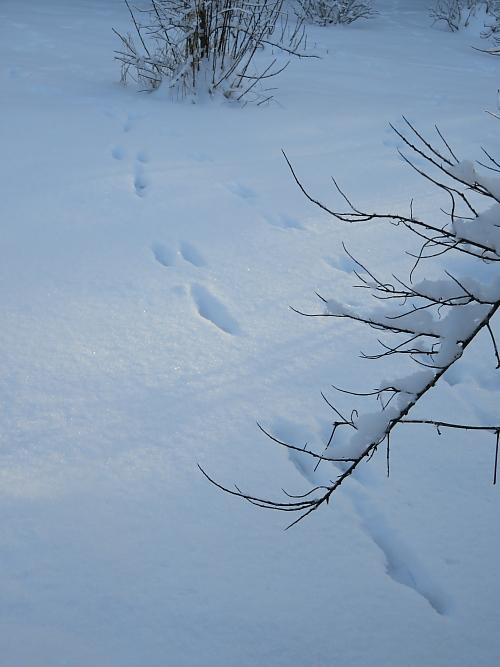 Piha lumta Rusakko 庭 雪 フィンランド うさぎ