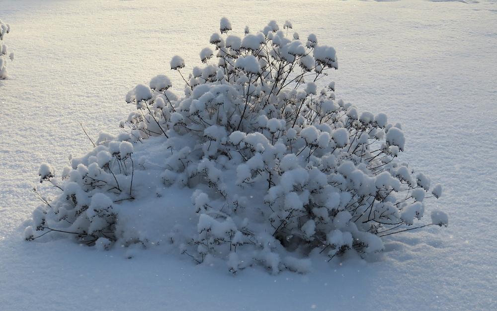 Talvi Finland フィンランド 冬 雪 ダイヤモンドダスト