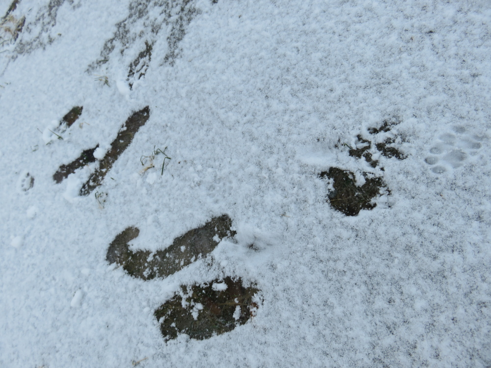 フィンランド 冬 雪 猫 つるっ
