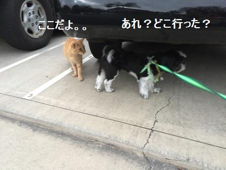 IMG_5971moji.jpg