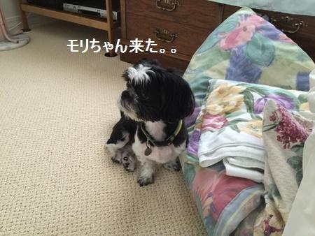 IMG_6024moji.jpg