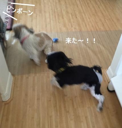 IMG_6238moji.jpg