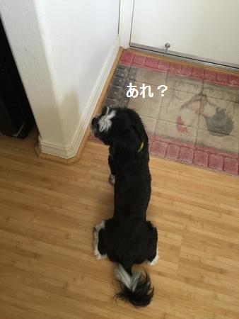IMG_6281moji.jpg
