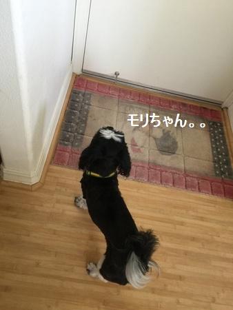 IMG_6282moji.jpg