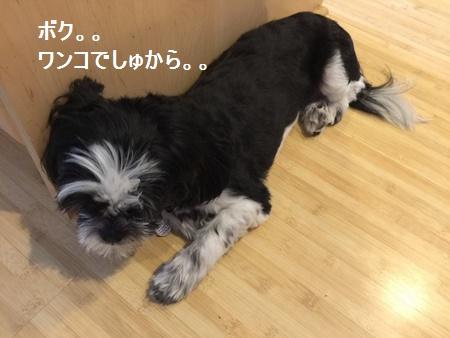 IMG_6340moji.jpg
