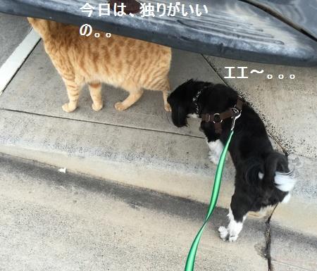 IMG_6356moji.jpg