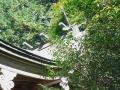ログハウス温泉14