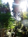 ログハウス温泉2