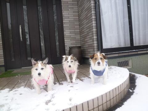 大雪46)