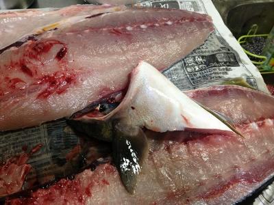 2015.12.30魚3