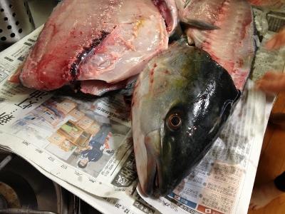 2015.12.30魚4