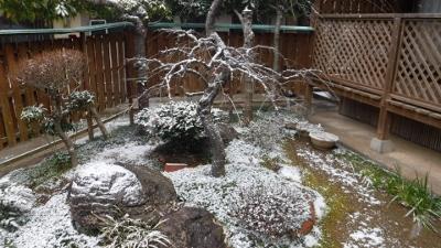 2016.1.24雪
