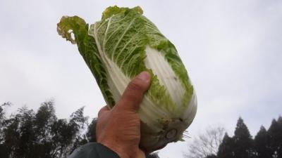 2016.1.30菜園4
