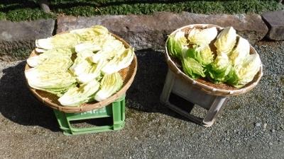 2016.2.21白菜