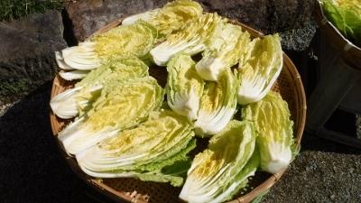 2016.2.21白菜2