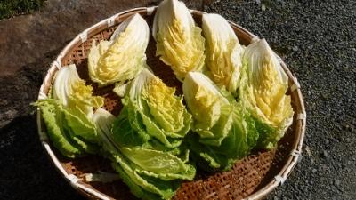 2016.2.21白菜3