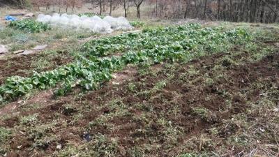 2016.2.27菜園23