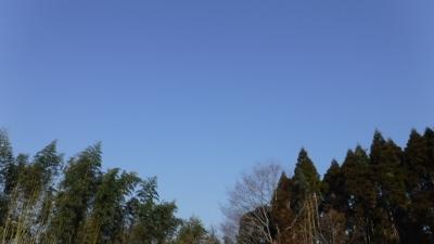 2016.3.5菜園