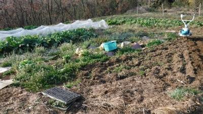 2016.3.5菜園3