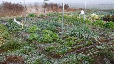 2015.12.28菜園