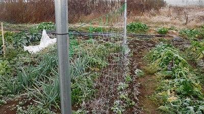 2015.12.28菜園4
