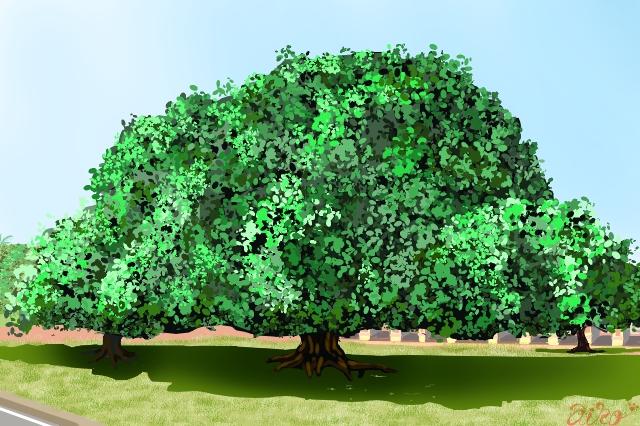 気になる木2