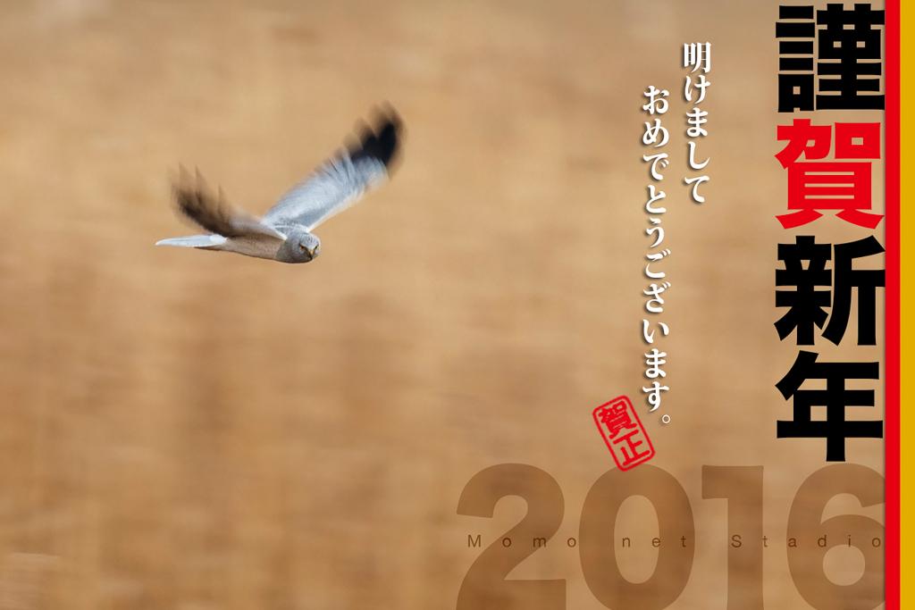20151231-2016.jpg