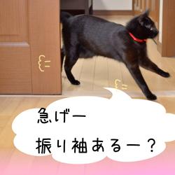 g_DSC9633.jpg