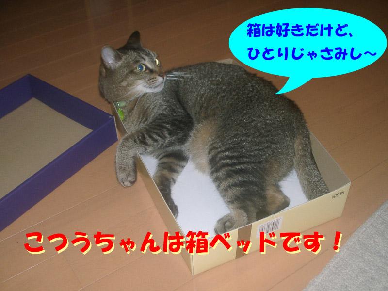 安眠妨害4