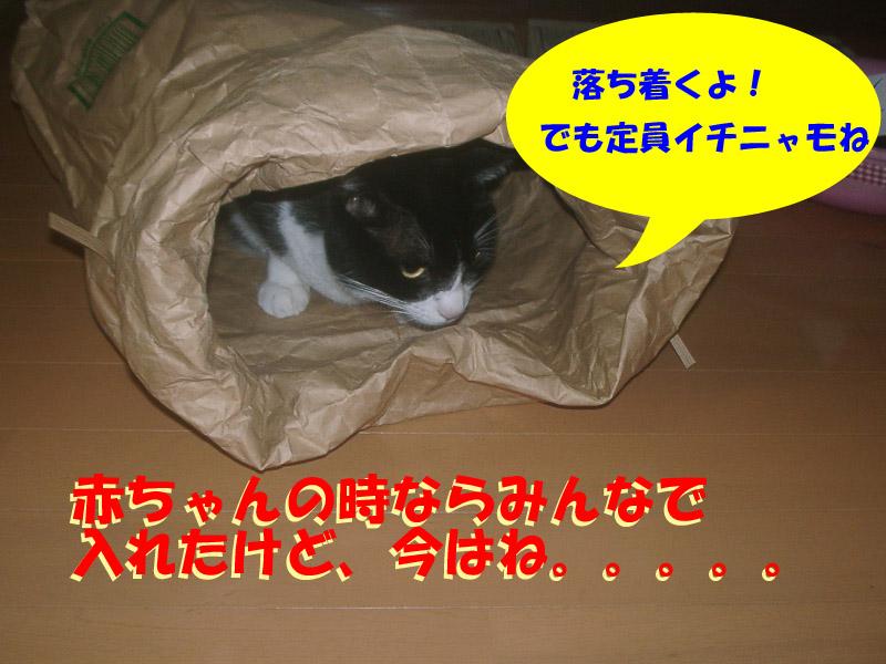 ツーちゃん袋3