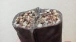 ジバニャンのチョコボー プレミアム