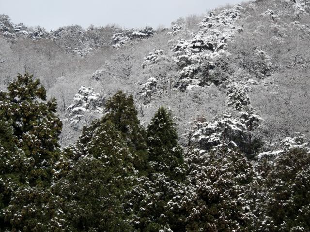 N6919山に雪