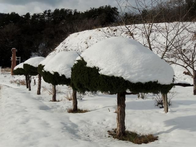 N7003雪化粧