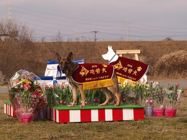 0123功労犬