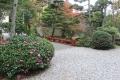 猿田彦神社紅葉と山茶花