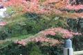 内宮擬宝珠と紅葉