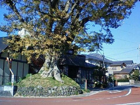 iwabuchi enoki1 岩淵一里塚 写真